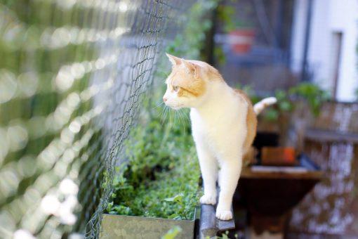 Schutznetze Katzenschutznetze Netze für Haus und Garten Balkonsicherheit