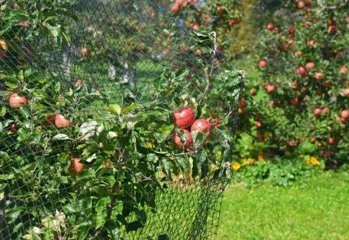 Erntenetze Apfelbaum
