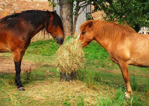 Heuntze für Pferde