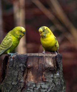 Vogelschutznetz für kleine Vögel, Singvögel, Wellensittiche, Papageien