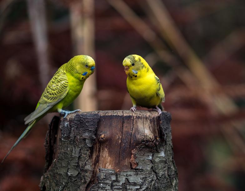 vogelschutznetz f r kleine v gel singv gel wellensittiche papageien schutznetze planen. Black Bedroom Furniture Sets. Home Design Ideas