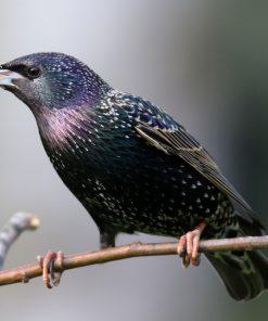 Vogelschutznetze