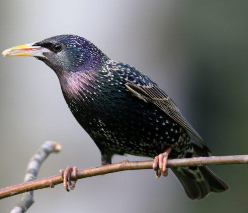Vogelschutznetz gegen Stare